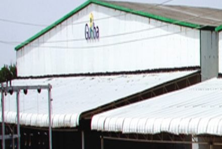 Seed Cold Storage   Seed Storage Services